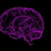 تفاوت بین مغز و ذهن